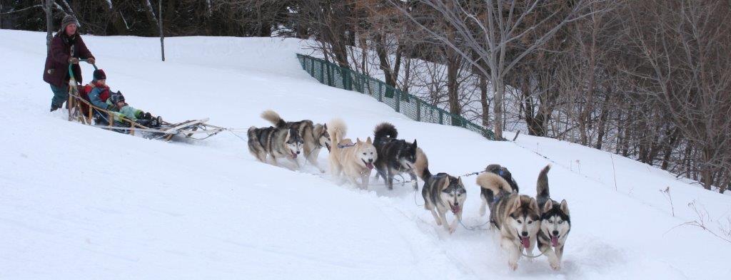 Traineau de chiens CLSS